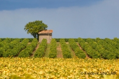 045-Cabane-de-vigne-T